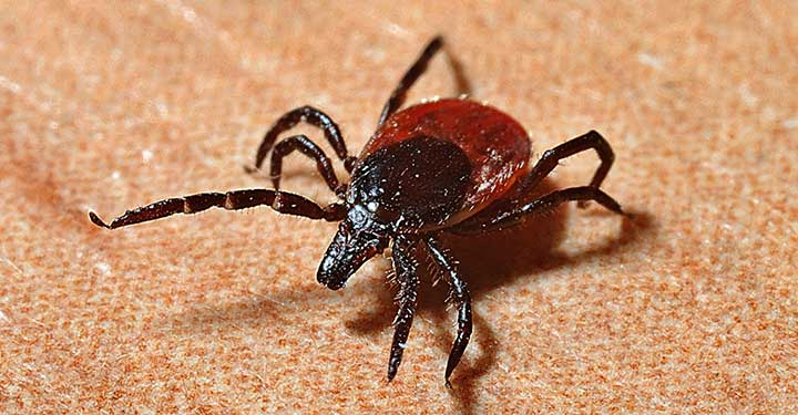 Ticks, Lyme Disease and How To Protect Yourself