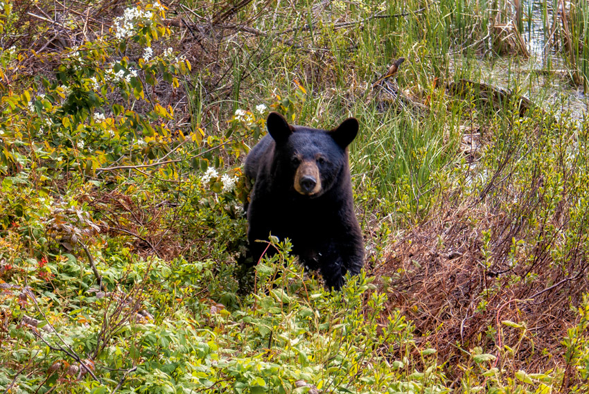 Bear Gallbladder Poaching: Is $67,370 In Fines Enough?