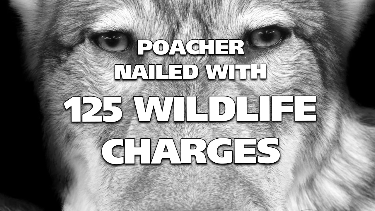 Poacher Gets Nailed with 125 Wildlife Charges