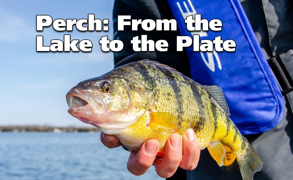 Catching and Eating Perch: From the Lake to the Plate