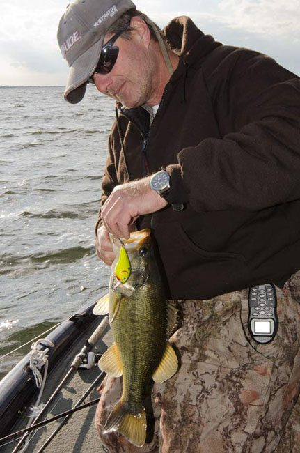 Mike Burriss unhooks his Squarebilled Crankbait from an aggressive late Largie