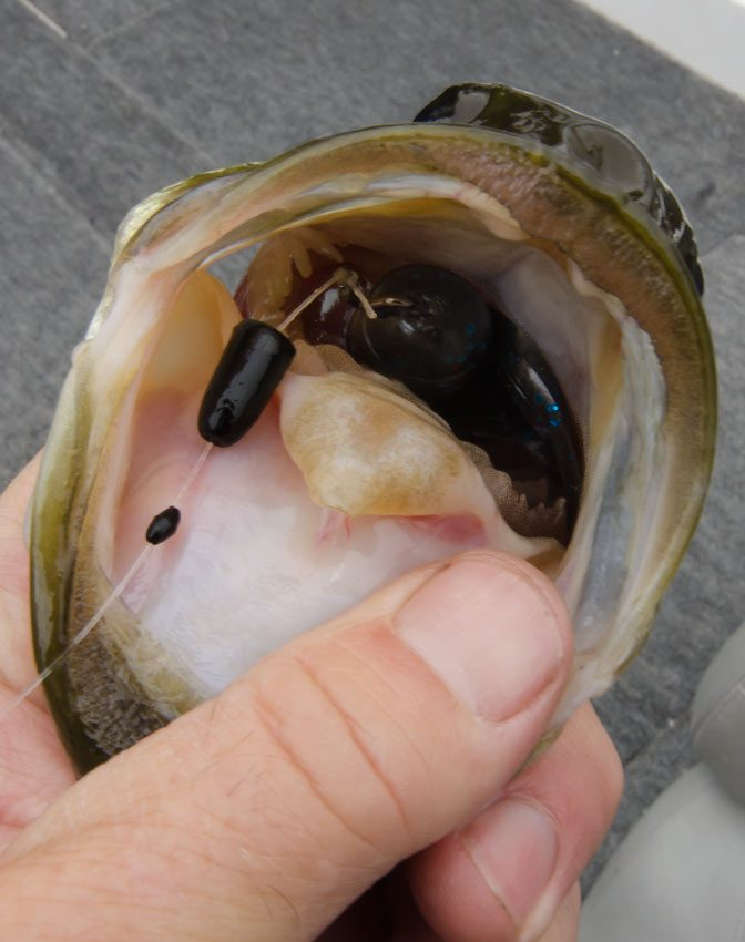 Talk about committing to a bait, this Tube works!