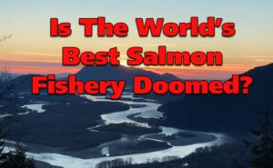 Chinook, Coho, Pink, Sockeye: Is The Best Salmon Fishery In the World Doomed?