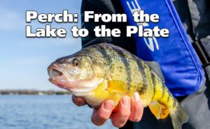 Is Perch Good To Eat? – From the Lake to the Plate
