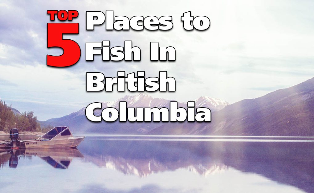 Top 5 Places to Fish in British Columbia