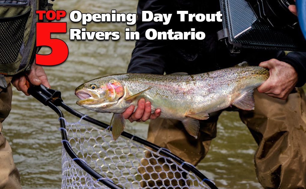 Top 5 Trout Rivers