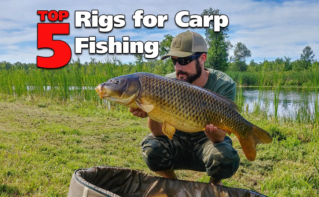 Top 5 Rigs for Carp