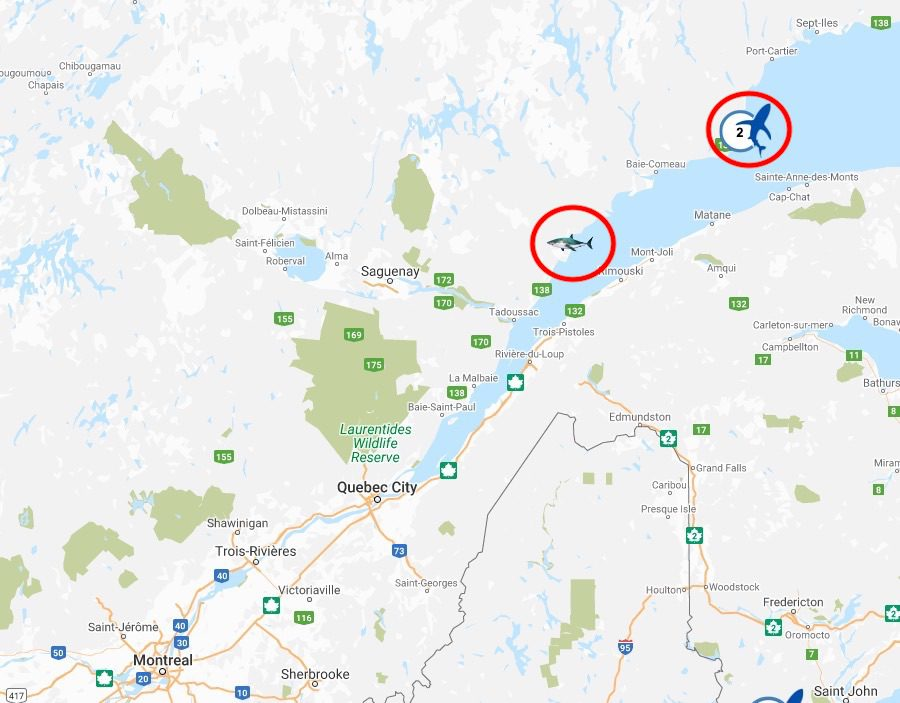 Great White Shark range in the St. Lawrence River