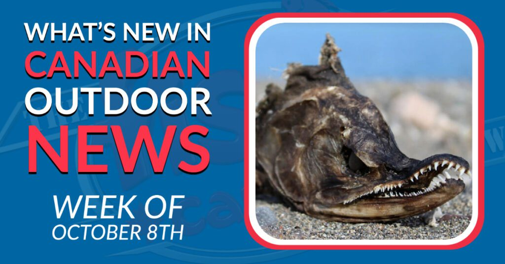 White Moose and Stranded Salmon -  Fish'n Canada's Week in Review